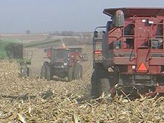 Harvest Corn Farm