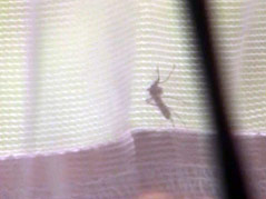 mosquito sioux falls net capture west nile