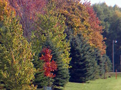 fall colors \ fall foliage \ fall foilage \ autumn colors