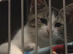 humane society cat shelter pets adoption