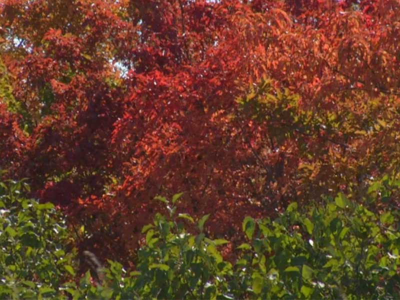 fall colors / foliage / leaves / first day of autumn