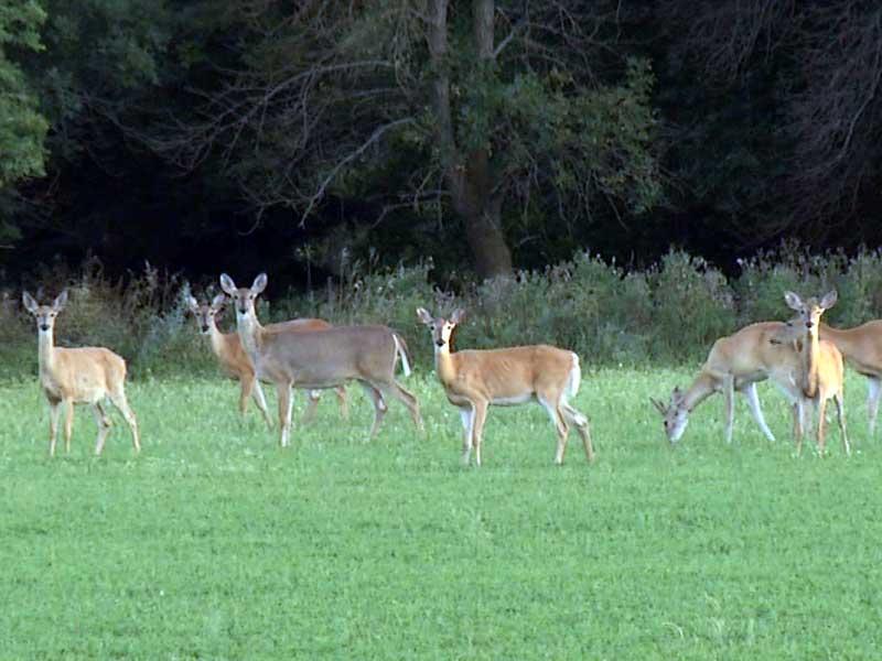 deer hunting season special in sioux falls herd