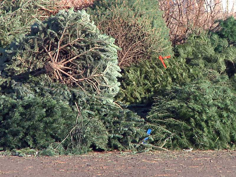 christmas tree dropoff sioux falls