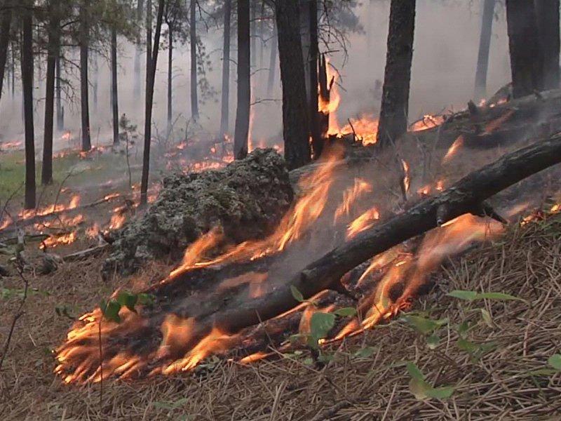 black hills wildfires flames