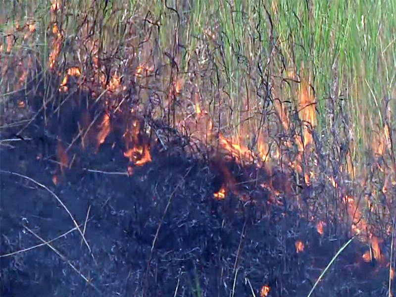 myrtle fire