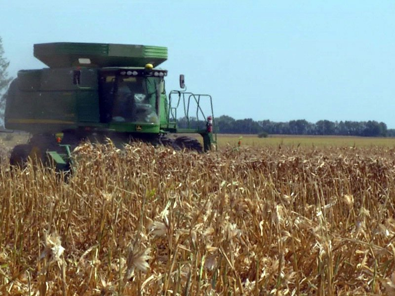 corn field early harvest agriculture crop grains combine tractor