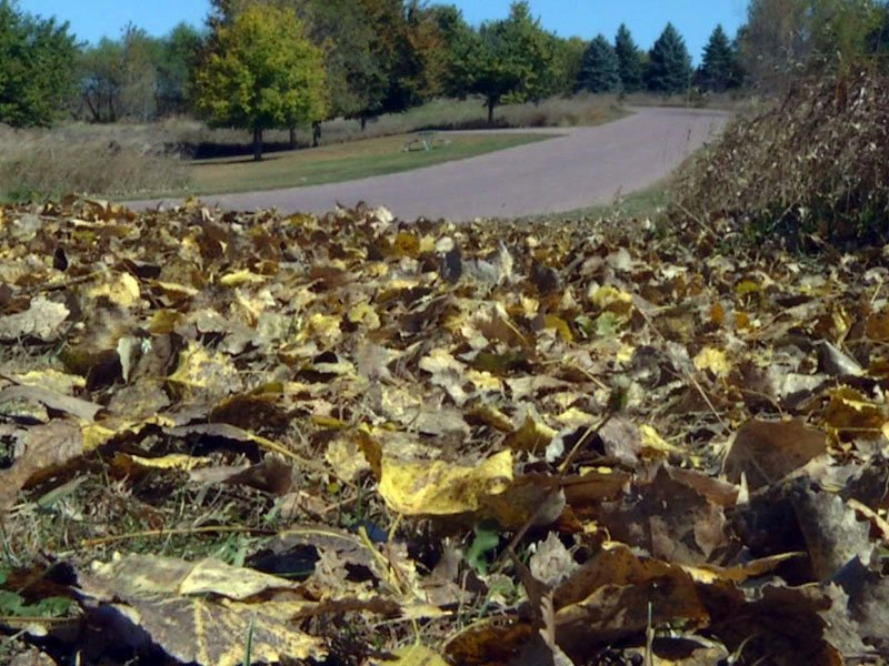 dry fall leaves drought