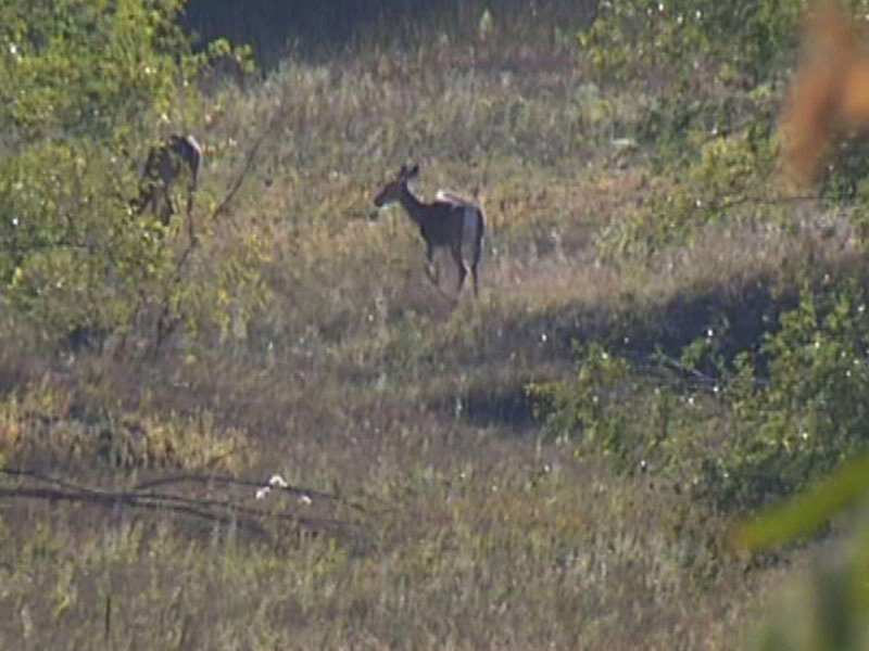 deer hunting animals fields