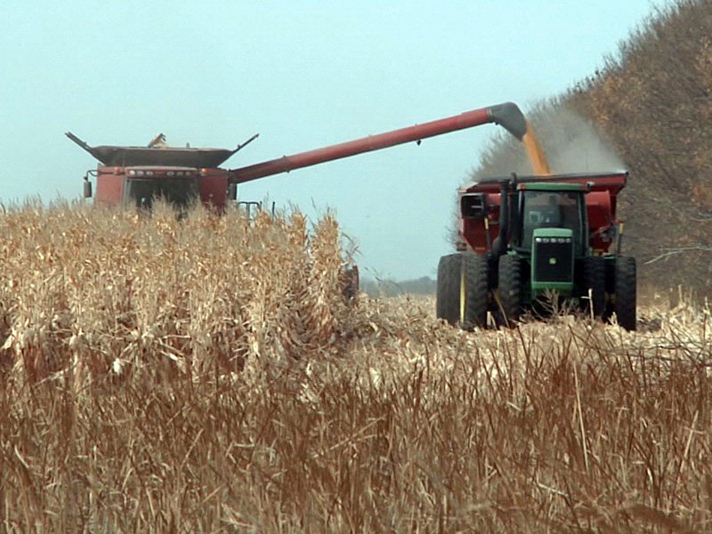 corn crop harvest field agriculture markets yield combine tractors