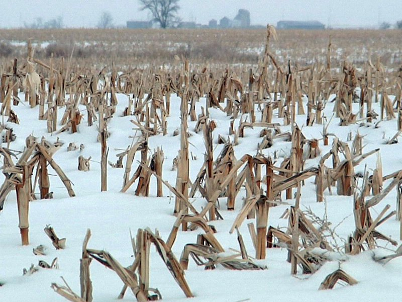 winter corn field covered in snow agriculture markets