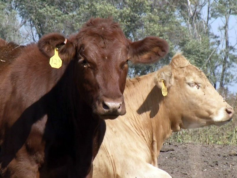 farm land value on the rise, farm, cows, cattle