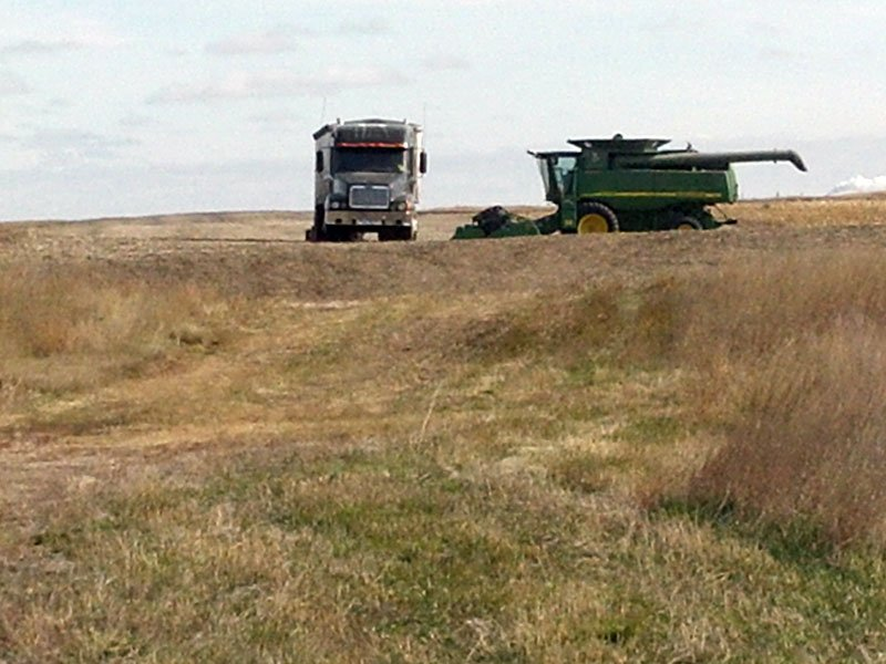 harvest near bowdle