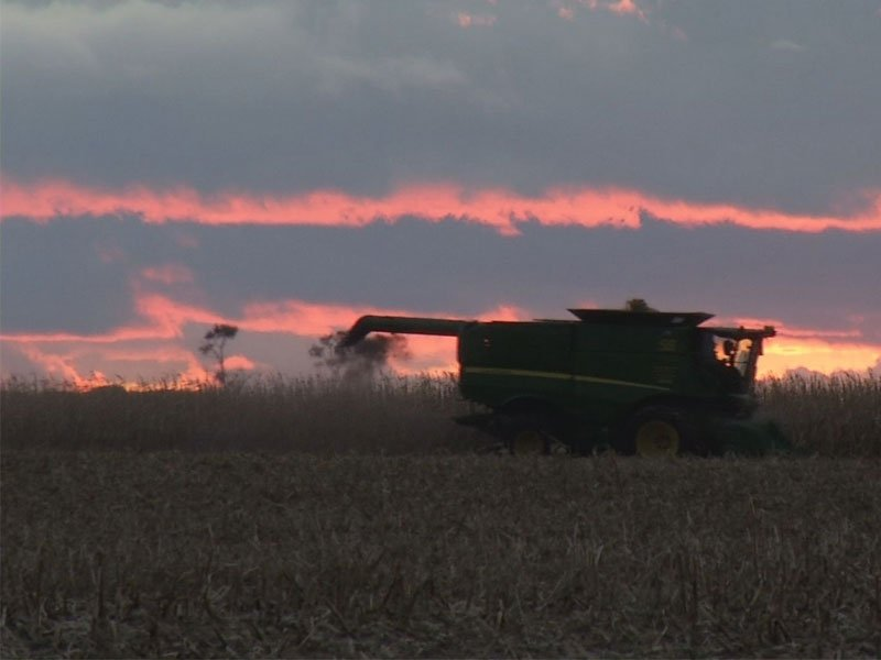 wet weather, harvest season, sunset