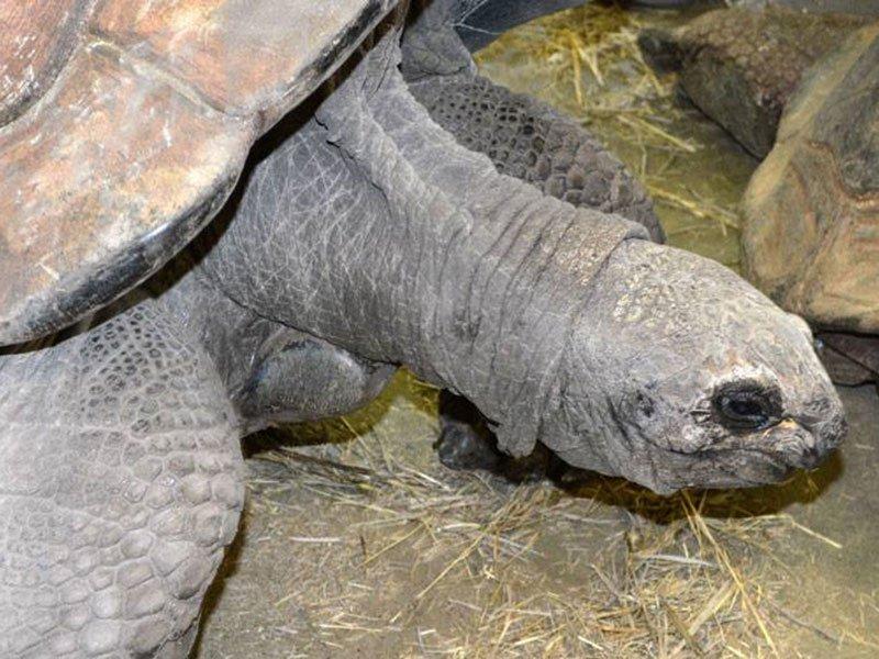 orville tortoise reptile gardens
