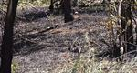 Two Grass Fires In 24 Hours In Rapid City