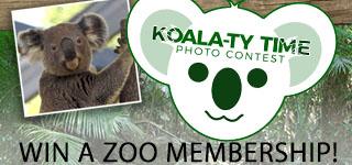 Koala-ty-Time-320x150