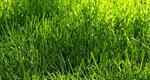 lawn grass spring
