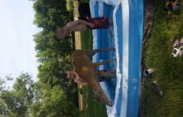 Hot weather = kids and deer and a pool