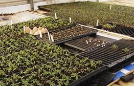 Cherry Rock Farms Preps For Growing Season