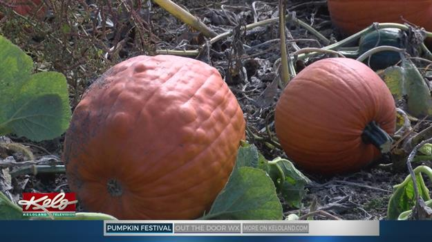 Pumpkin Festival Returns To Riverview Tree Farm
