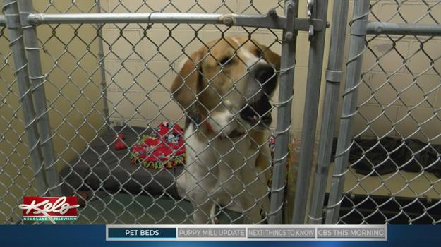 Mattress Maker To Provide Free Bed For Each Pet Adopted At Humane Society