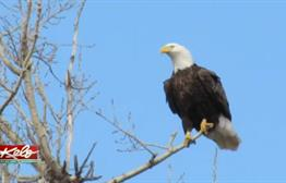 15 Indicted For Illegal Trafficking Of Eagles And Other Migratory Birds
