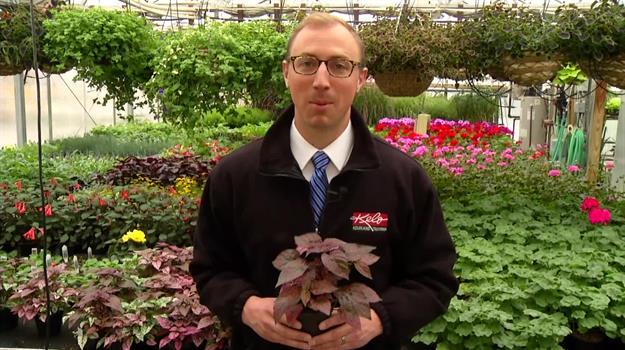 Southeast Tech Students Prep For Plant Sale