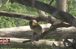 Great Plains Zoo Welcomes Baby Snow Monkey