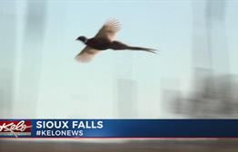 Hunting Works For South Dakota' Kicks Off