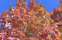 Fall Colors At Full Brightness In KELOLAND