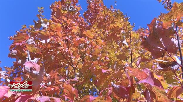 Fall Colors At Full Brightness In KELOLAND
